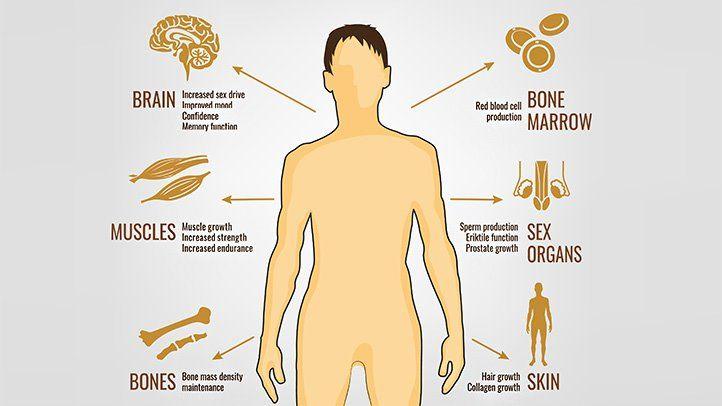 Wybór najlepszego wzmacniacza testosteronu