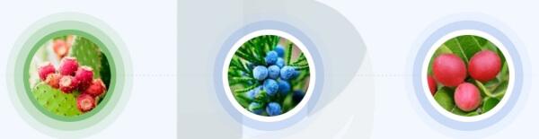 Jakie naturalne składniki znajdują się w preparacie Friocard?
