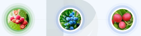 Kompagin - jakie składniki są zawarte w kapsułkach?